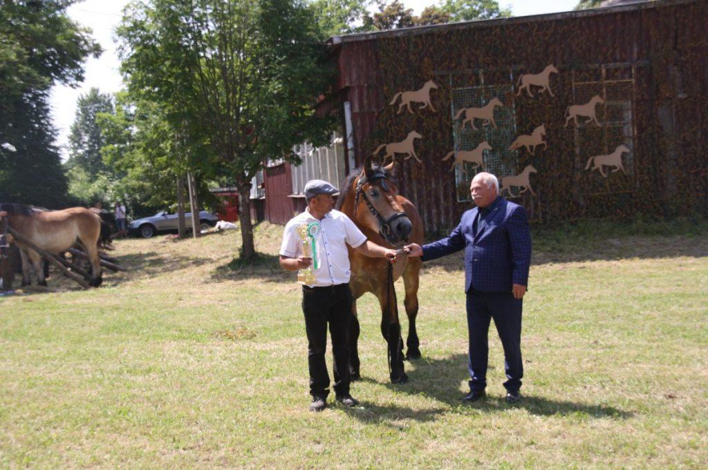 Kajetan - Nt, najlepszy koń w klasie koni rocznych